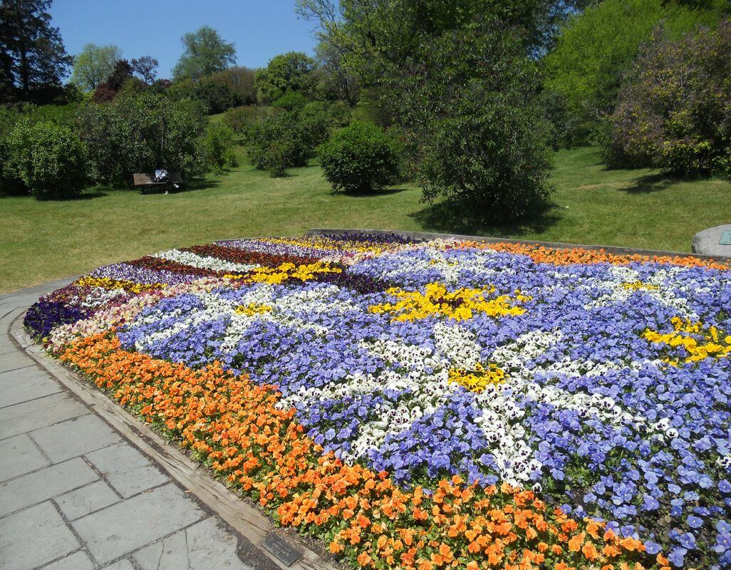 pic2 - Park Pansy bed